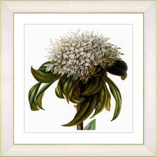 Vintage Botanical No. 37W by Zhee Singer Framed Giclee Print Fine Wall Art