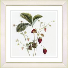 Vintage Botanical No. 06W by Zhee Singer Framed Giclee Print Fine Wall Art