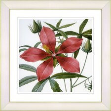 Vintage Botanical No. 22W by Zhee Singer Framed Giclee Print Fine Wall Art
