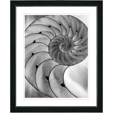 "<strong>Studio Works Modern</strong> ""Cambrian Sea Shell"" Framed Fine Art Giclee Print"