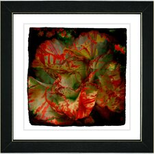 """Deep Red Carnation"" by Zhee Singer Framed Graphic Art"
