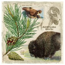 American Bison Occasions Coasters Set (Set of 4)