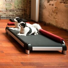 Dog Lounge with Long Legs and a Anodized Frame
