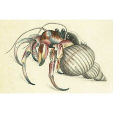 Hermit Crab Placemat (Set of 6)