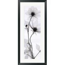 Tall Dahlia Framed Photograph