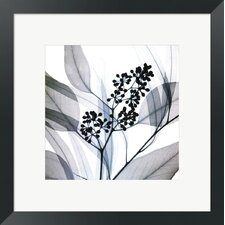 Eucalyptus by Steven N. Meyers Framed Photographic Print