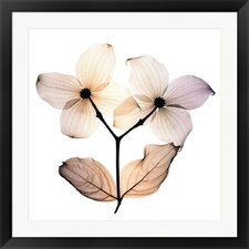 Dogwood by Steven N. Meyers Framed Photographic Print