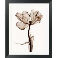 Parrot Tulips I by Steven N. Meyers Framed Photographic Print