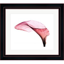 Giant Calla SM Steven N. Meyers Framed Photographic Print