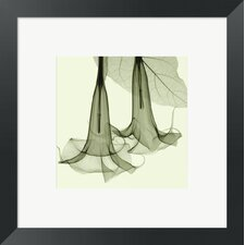 Datura by Steven N. Meyers Framed Photographic Print