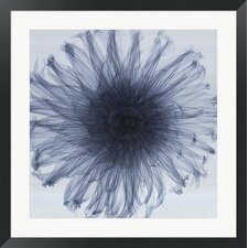 Dahlia by Steven N. Meyers Photographic Print