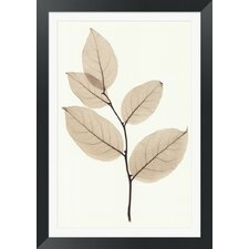 Salal by Steven N. Meyers Framed Photographic Print