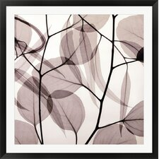 Eucalyptus Leaves [Positive] by Steven N. Meyers Photographic Print