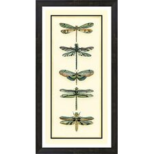 Dragonfly Collector II by Chariklia Zarris Framed Painting Print