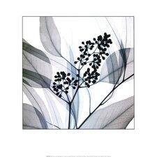 Eucalyptus by Steven N. Meyers Photographic Print