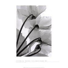 Cyclamen Study by Steven N. Meyers Photographic Print