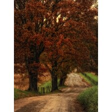 Dirt Road by Danny Head Photographic Print on Canvas