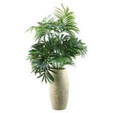 Parlor Palm Desk Top Plant in Decorative Vase