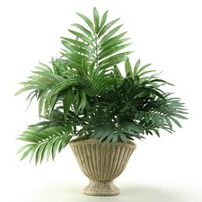 <strong>D & W Silks</strong> Parlor Palm in Planter