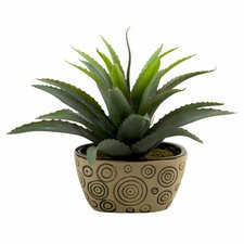 Star Succulent Floor Plant in Pot