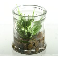 Mini Aloe Succulent Floor Plant in Jar