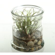 <strong>D & W Silks</strong> Easter Grass in Round Jar