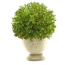 Boxwood Ball Floor Plant in Planter