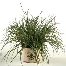 Wild Grass in Round Wood Pot