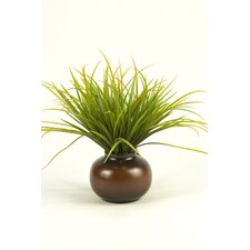 Grass in Round Pot