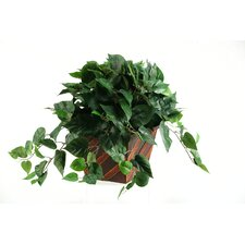 Philo Ivy in Square Wooden Planter