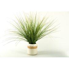 Onion Grass in Round Ceramic Pot