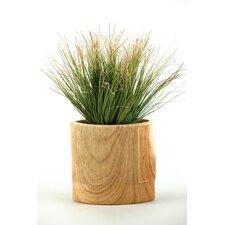 Onion Grass in Oval Ceramic Planter