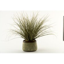Onion Grass in Oblong Ceramic Planter