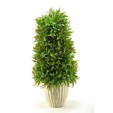 Wild Grass Cone Round Topiary in Pot