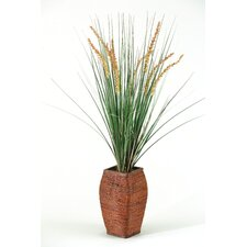 Onion Dogstail Grass in Square Tapered Rattan Planter