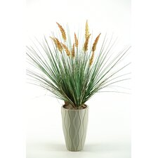 Onion Grass with Dogstail in Ceramic Vase