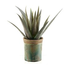 Striped Agave Floor Plant in Pot