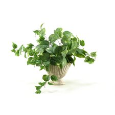 <strong>D & W Silks</strong> Pothos Desk Top Plant in Urn