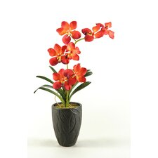 Vanda Orchids in Ceramic Vase