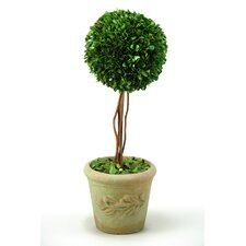 Preserved Boxwood Ball Topiary in Stone Planter