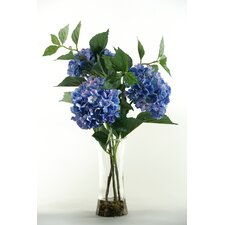 Hydrangeas in Tall Glass Vase
