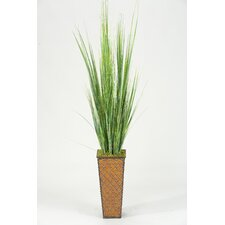 <strong>D & W Silks</strong> Onion Grass in Square Tapered Planter
