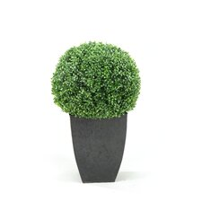 <strong>D & W Silks</strong> Boxwood Ball Square Topiary in Planter