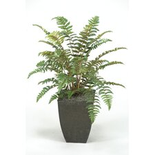 Leather Fern Plant in Square Metal Planter