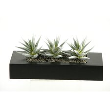 Flocked Aloe Succulents Desk Top Plant in Planter