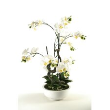 Orchids in Contemporary Ceramic Bowl