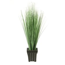 Zebras Grass in Square Ceramic Planter