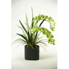 <strong>D & W Silks</strong> Orchids in Oval Ceramic Planter