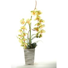 Phalaenopsis Orchids in Ceramic Planter