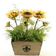 Sunflowers in Rectangle Fleur De Lis Planter
